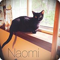 Adopt A Pet :: Naomi - Bentonville, AR
