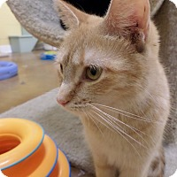 Adopt A Pet :: Mika - Lake Charles, LA