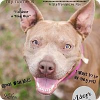 Adopt A Pet :: Rue - Port Charlotte, FL