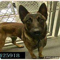 Adopt A Pet :: A425918 - San Antonio, TX