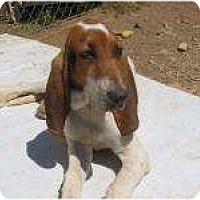 Adopt A Pet :: Ralphie - Acton, CA