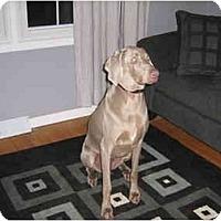 Adopt A Pet :: Sylvie - Attica, NY