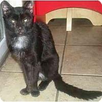 Adopt A Pet :: Christopher - Summerville, SC