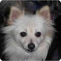 Adopt A Pet :: Muffy - Rigaud, QC