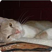 Adopt A Pet :: Rosalynda - Phoenix, AZ