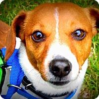 Adopt A Pet :: Thomas - Wappingers, NY