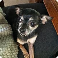 Adopt A Pet :: Bugsy - San Antonio, TX