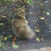 Adopt A Pet :: Sina* - Cat Spring, TX