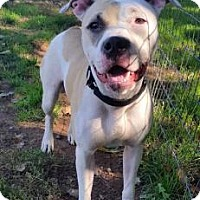Adopt A Pet :: Diamond - Spring City, PA