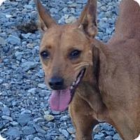 Adopt A Pet :: Dorothy - Albemarle, NC