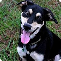 Adopt A Pet :: Dude - Youngsville, NC
