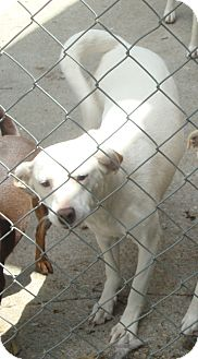 Terrier (Unknown Type, Small) Mix Dog for adoption in Daleville, Alabama - Sweetie