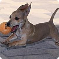Adopt A Pet :: Chrissy - Torrance, CA