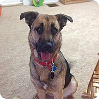 Adopt A Pet :: Winnie - New Boston, NH