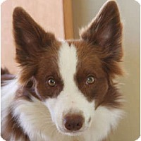 Adopt A Pet :: Cooper - Glenrock, WY