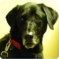Adopt A Pet :: CHASE - Windham, NH