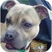 Adopt A Pet :: Joe Boy - Sunderland, MA