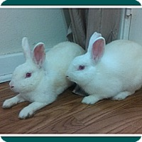 Adopt A Pet :: Asia and Rain - Williston, FL