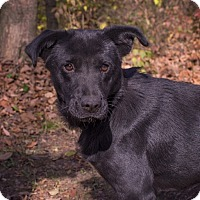 Adopt A Pet :: Joyce - Lewisville, IN