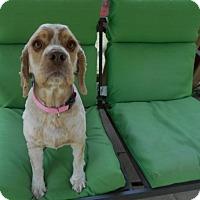 Adopt A Pet :: Maggie  -Adopted! - Kannapolis, NC
