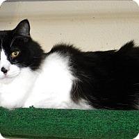 Adopt A Pet :: Einstein - Prescott, AZ