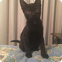 Adopt A Pet :: Joker - Richmond, VA