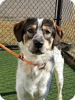 Hound (Unknown Type) Mix Dog for adoption in Chesapeake, Virginia - Elijah
