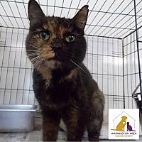 Adopt A Pet :: Butterscotch - Eighty Four, PA