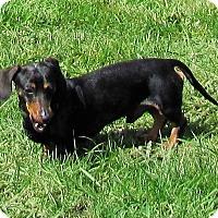 Adopt A Pet :: CHARLIE K - Portland, OR