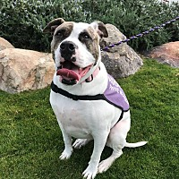 Adopt A Pet :: Annie - Gilbert, AZ