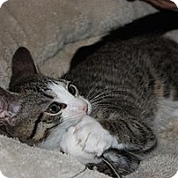 Adopt A Pet :: Britcher (LE) - Little Falls, NJ