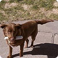 Adopt A Pet :: Abby - Alliance, NE