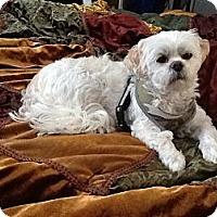 Adopt A Pet :: Mop - Lake Forest, CA