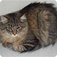 Adopt A Pet :: Charley - Milwaukee, WI