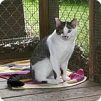 Adopt A Pet :: Louie - Dover, OH