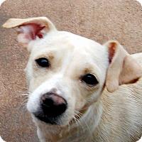 Adopt A Pet :: Rafaela - Oakley, CA