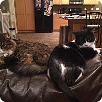 Adopt A Pet :: Reggie - Chesterfield Township, MI