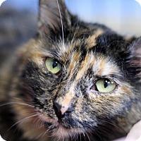 Adopt A Pet :: Lillibeth - Chicago, IL