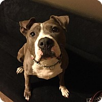 Adopt A Pet :: Skylar - New Canaan, CT