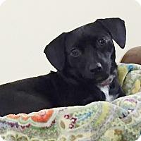 Adopt A Pet :: Jubilee - San Antonio, TX