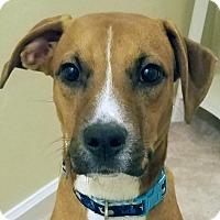 Adopt A Pet :: Jack - Spring Valley, NY