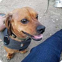 Adopt A Pet :: Jesse James - Jarrell, TX
