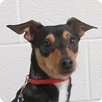Adopt A Pet :: Tye - LaGrange, KY