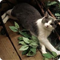 Adopt A Pet :: Levi - Chattanooga, TN