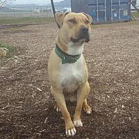 Adopt A Pet :: Mango - Yreka, CA