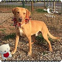 Adopt A Pet :: Theo - Hicksville, NY