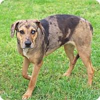 Adopt A Pet :: Lulu - Goodlettsville, TN