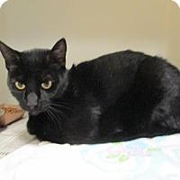 Adopt A Pet :: Frankie - Cumming, GA