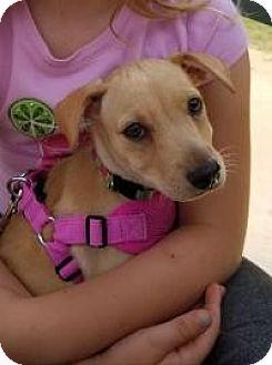 Terrier (Unknown Type, Medium) Mix Puppy for adoption in New Smyrna Beach, Florida - Marcia