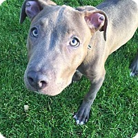 Adopt A Pet :: Norman - North Olmsted, OH